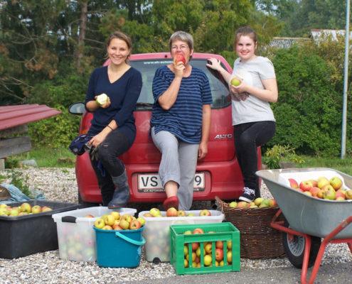 Æblehøst hos Møllehusets Bed & Breakfast