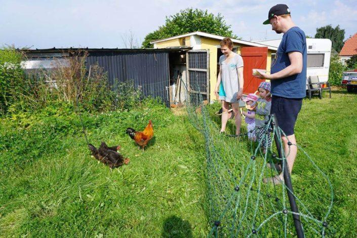Møllehusets høns udenfor