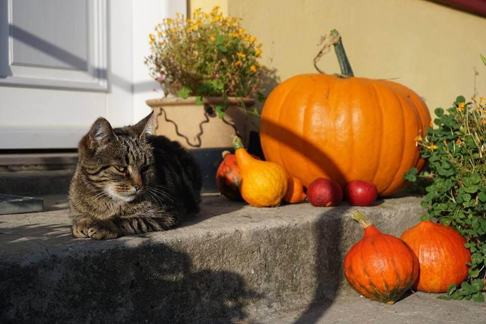 Møllehusets kat på fortrappen