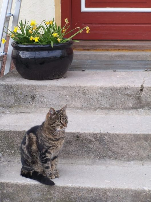 Møllehusets kat på trappen